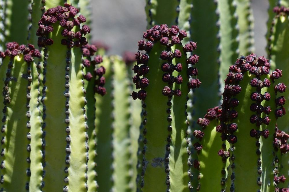 5 giftige kamerplanten en hun veilige alternatieven