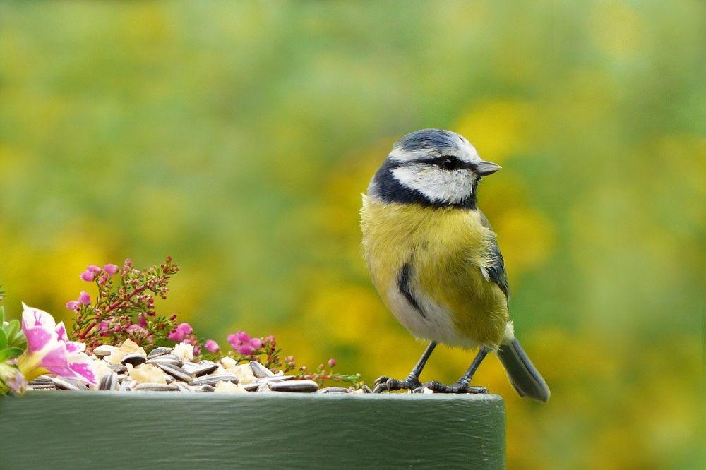 5 tips om meer vogels in je tuin of rondom je huis te krijgen