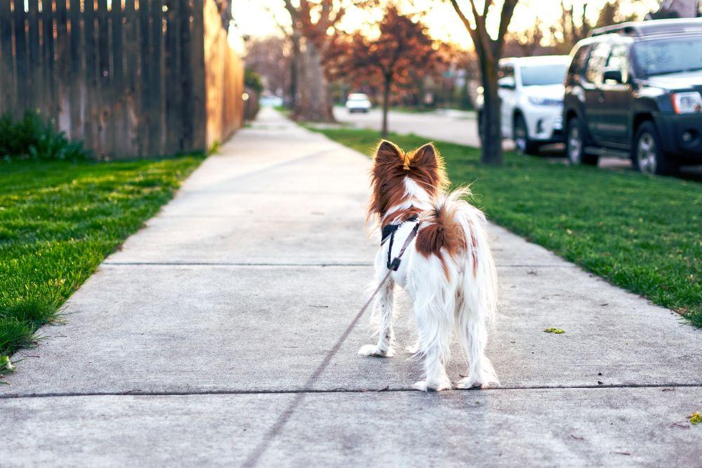 6 ideale beroepen voor dierenliefhebbers