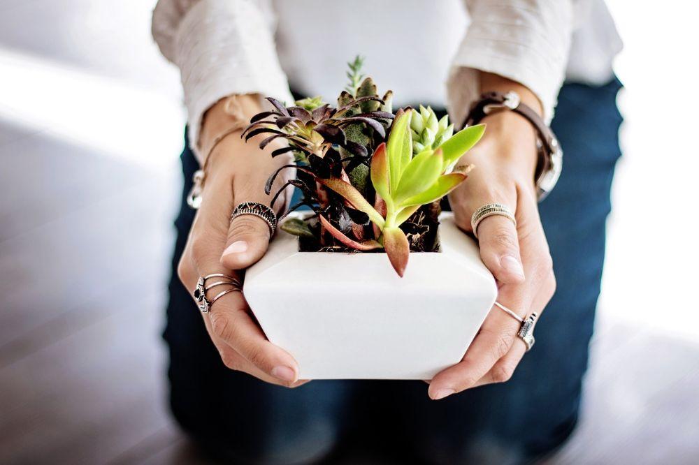 De beste kamerplanten voor mensen zonder groene vingers