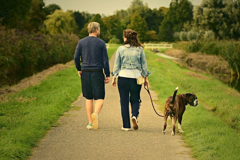 Niets zo relaxed als een ontspannen wandel met uw hond