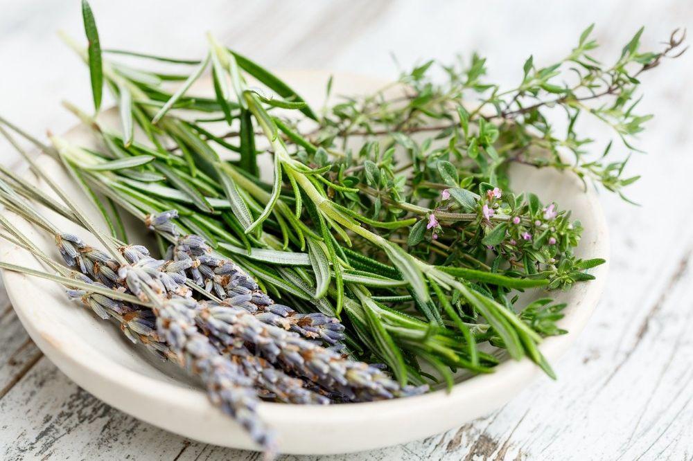 Sierplanten én smaakmakers: waarom kruiden kweken heerlijk is
