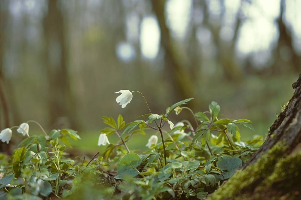 Zo geniet je van de natuur zonder ze te belaste