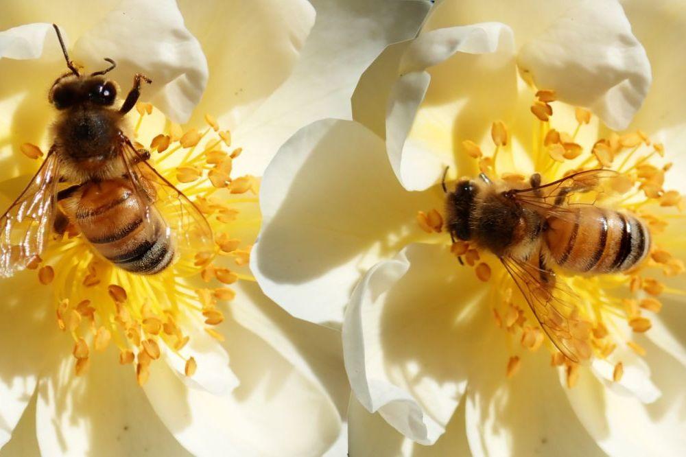 Zo help je mee aan het redden van de bije