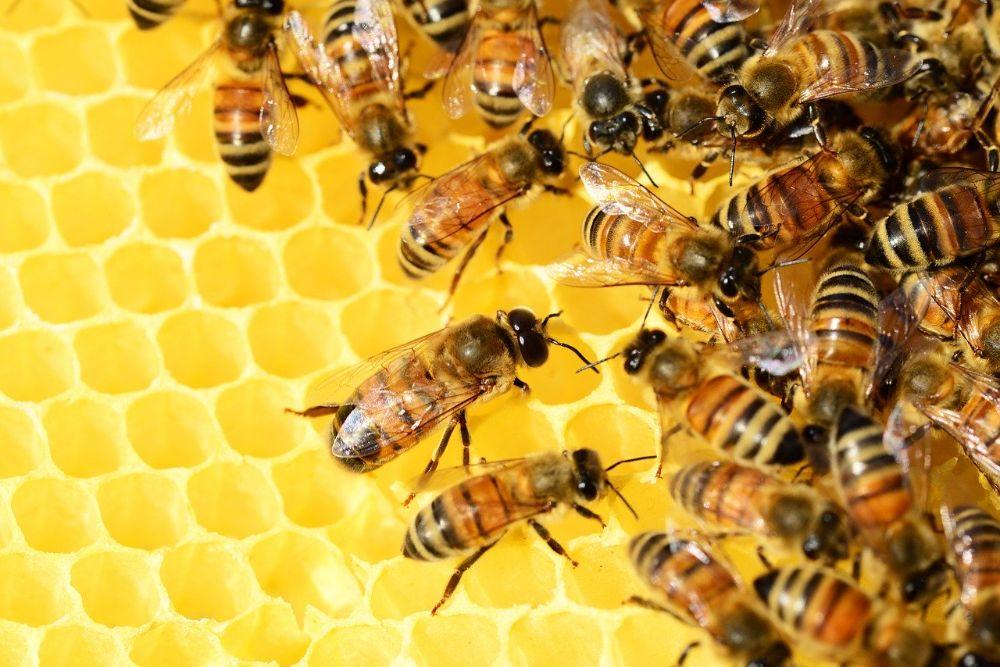 Zo help je mee aan het redden van de bijen