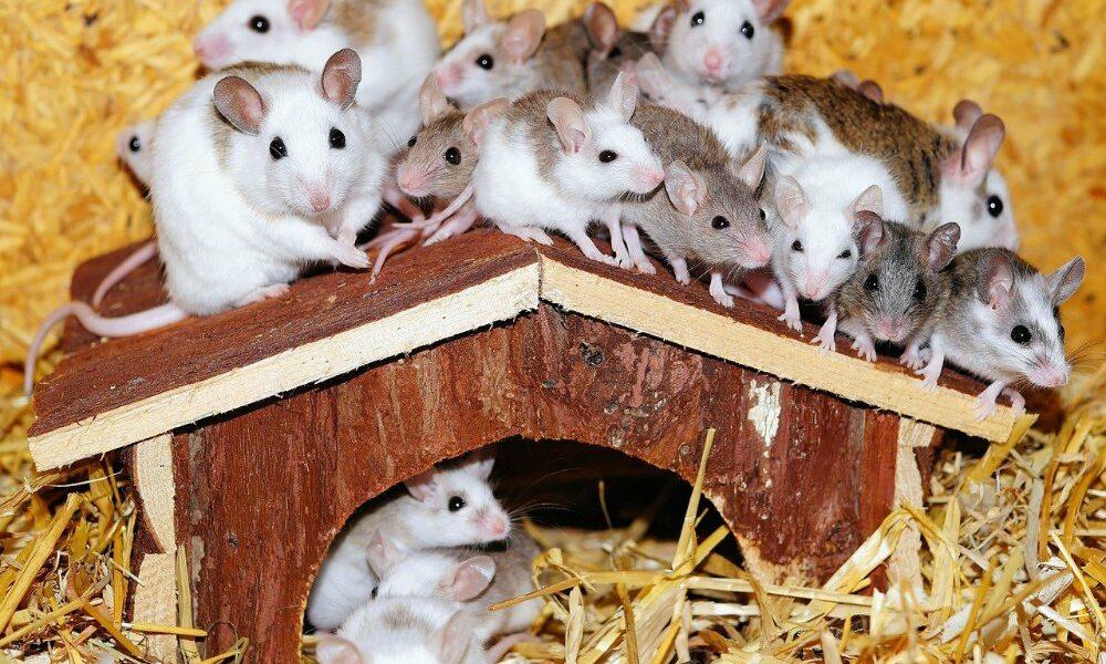 Weg met muizen en wespen